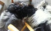 Unter Frauchens Stuhl auf der Terrasse ist es auch gemütlich.