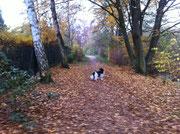 Die Blätter gehören eigentlich an die Bäume, aber jetzt liegen sie unten. Frauchen sagt, das ist Herbst.
