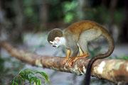 Fauna amazzonica