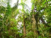 Foresta di Xixuaù