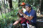 Corsi di formazione o gestione forestale