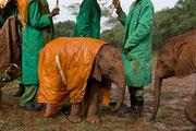 Elefantini orfani nel rifugio David Sheldrick Wildlife Trust in Kenya