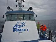 Unterwegs auf der Arctic Whale 1 - und das Wetter wird schlechter...