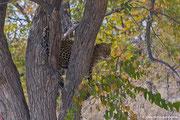 Ihre Majestät klettert vom Baum herab