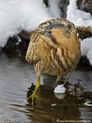 Was für ein Erlebnis, diesem seltenen Vogel so nah sein zu dürfen!