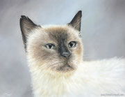"""Natalie"" - Katzenportrait in Pastellkreide, 30 cm x 24 cm"