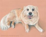 """""""Rico"""" - Hundeportrait in Pastellkreide auf getöntem Papier, 30 cm x 24 cm"""