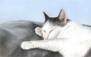 """Arthur"" - Katzenportrait in Pastellkreide, ca. 20 cm x 15 cm"