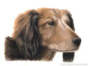 """Dackel Youri"" - Hundeportrait in Pastellkreide, 20 cm x 15 cm"