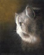 """Ramses"" - Katzenportrait in Pastellkreide, 24 cm x 30 cm"