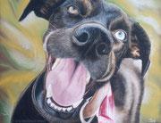 """""""Melchi"""" - Hundeportrait in Pastellkreide, 30 cm x 24 cm"""