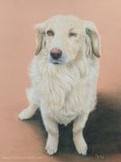 """""""Finni, die einäugige Piratin"""" - Hundeportrait in Pastellkreide, 30 cm x 40 cm"""