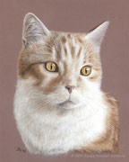 """Obama"" - Katzenportrait in Pastellkreide auf getöntem Papier, 24 cm x 30 cm"