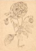 2257/ Bleistift, 1949, sign. Schadwinkel, 15x21cm, EUR 20,-