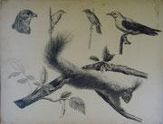 2328/ Tuschestudien, ~1905, H.Kipp unsign. (Zertifikat), 67x52cm, EUR 50,-