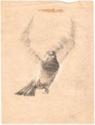 2264/ Bleistift, 1972, sign. Schadwinkel, 20x26cm, EUR 55,-