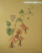 2806/ Blumen, 1970, sign. Zuhr, Rahmen 35x44cm, EUR 45,-