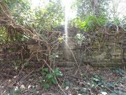 urwaldähnlicher bewuchs des innenhofes in der ruine schloss gleichenberg