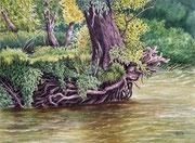 Uferwald, 30x40, Aquarell auf Papier