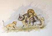 Jagende Löwen, 30x40, Aquarell auf Papier