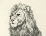 Löwe, 30x40, Bleistift auf Papier