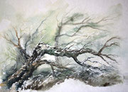 Windbruch, 30x40, Aquarell auf Papier