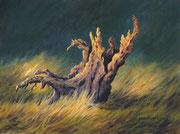 Baumstumpf, 30x40, Acryl auf Malplatte