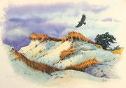 Seeadler über den Dünen, 30x40, Aquarell auf Papier