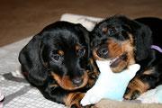 Brüderlein und Schwesterlein