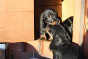 Gwendi und Garett, wer dörf no is Hundehüsli?