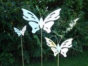 Schmetterling Typ Fantasie