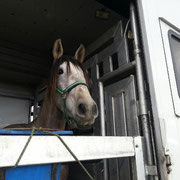 Ilustre LER auf dem Weg in die Schweiz mit www.horse-service.com