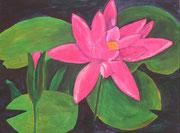 Seerose, pink