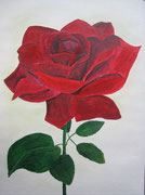 Rose in Acryl + Aquarell