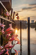 Blüten im Morgenlicht