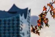 Herbstfarben und Elbphilharmonie