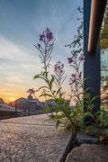 Deichtorhallen, Blüten und Sonnenaufgang