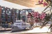 Florales am Museumshafen in der Hafencity