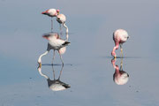Flamingos in der Atacama