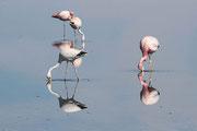 "Steffen Dörfel - ""Flamingos"""