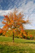 Herbststimmung Taunus