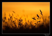 © Objectif Loutre - Stéphane Raimond - champ au crépuscule