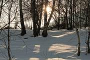 Tramonto invernale visto dal bosco