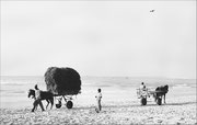 Croisement sur le sable  Photo: D Soubeyroux