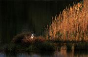 Couleurs d'automne  Photo:  J Houriez