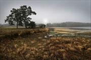 Brouillard à Chancelade  Photo:  D Lambert