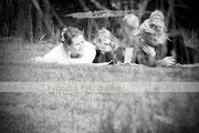 Familienshooting Familienfotos Franzis Fotostudio Walle
