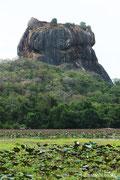 Sri Lanka(sigiriya)