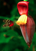 Nectar délicieux