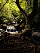 Forêt elfique
